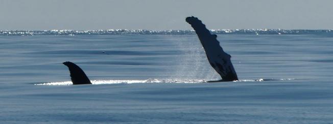 Baleine 1